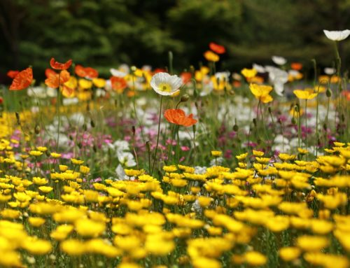 Out with pesticides, in with wildflowers.